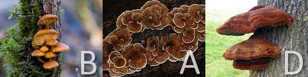 bad-fungus